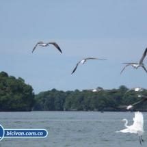 Bahia Malaga - Bicivan Kayak Colombia (28 de 32).jpg