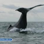bicivan-tour-kayak-mar-bahia-malaga-juanchaco-ladrilleros-colombia-avistamiento-de-ballenas