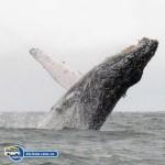 bicivan-tour-kayak-mar-bahia-malaga-juanchaco-ladrilleros-colombia-avistamiento-de-ballenas-en-buenaventura