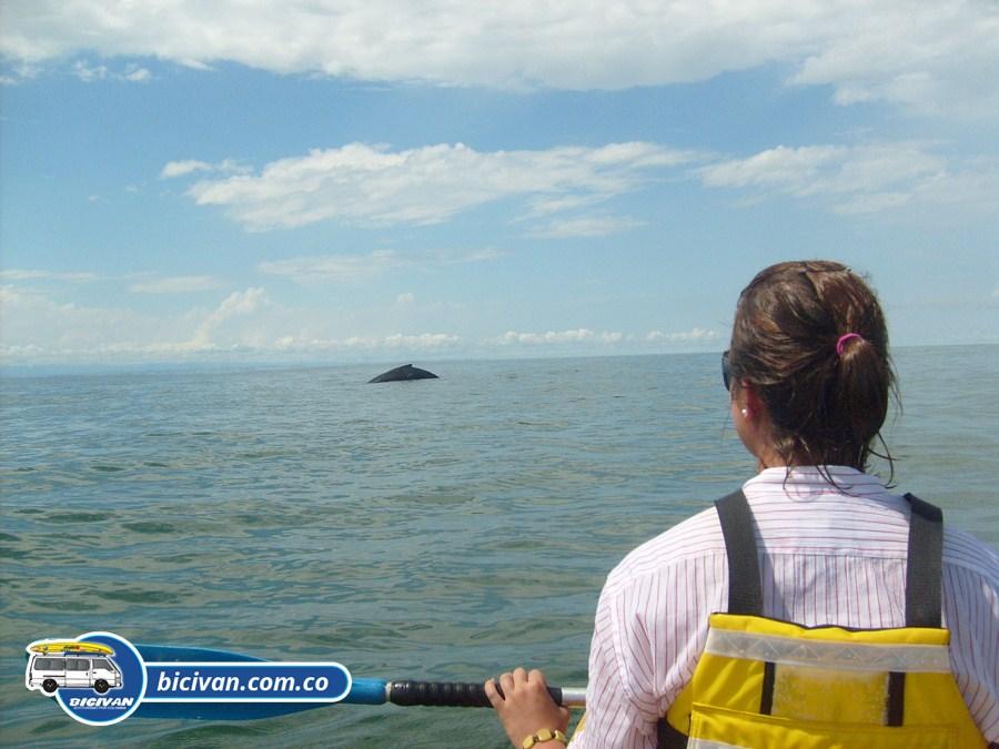 bicivan-tour-kayak-mar-bahia-malaga-juanchaco-ladrilleros-colombia-ballenas-en-el-pacifico-colombiano
