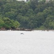 Kayak en Choco Colombia